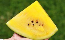 Porcja żółtego arbuza