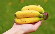 Garść mini bananów