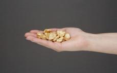 Garść bobu prażonego, czosnkowo-cebulowego