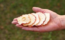 Garść chipsów jabłkowych