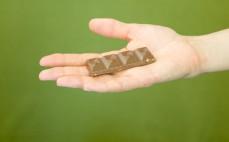 Rządek belgijskiej mlecznej czekolady z orzechami laskowymi ze stewią