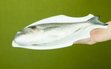Ryba dorada