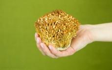 Porcja grzybów enoki złote