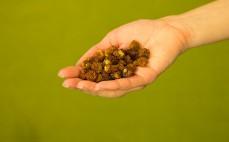 Garść suszonych jagód inkaskich