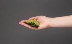 Garść suszonych liści kaffiru