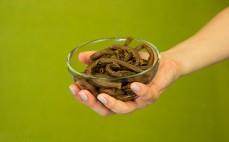 Porcja ugotowanego makaronu karobowego