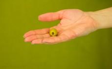 Zielona oliwka nadziewana anchois