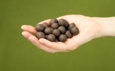 Garść orzechów laskowych w surowej czekoladzie