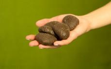 5 pierniczków w czekoladzie z nadzieniem śliwkowym