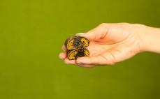 Pierniczki w czekoladzie z nadzieniem śliwkowym