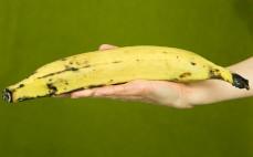 Plantan żółty