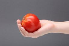 Pomidor bawole serce