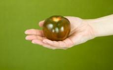 Pomidor Kumato