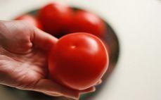 Średni pomidor
