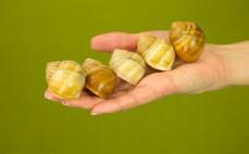 5 mrożonych ślimaków winniczków po burgundzku
