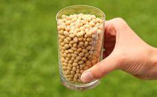 Szklanka nasion soi