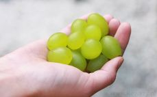 Garść winogron zielonych