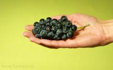 Kiść drobnych winogron