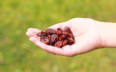 Garść wiśni suszonych
