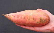Słodki ziemniak (batat)