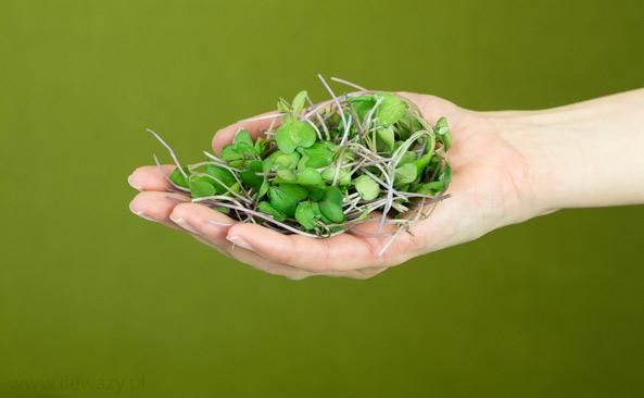 Mikro liście jarmużu