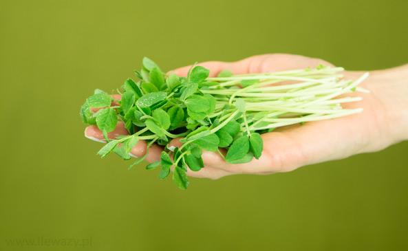 Mikro liście groszku